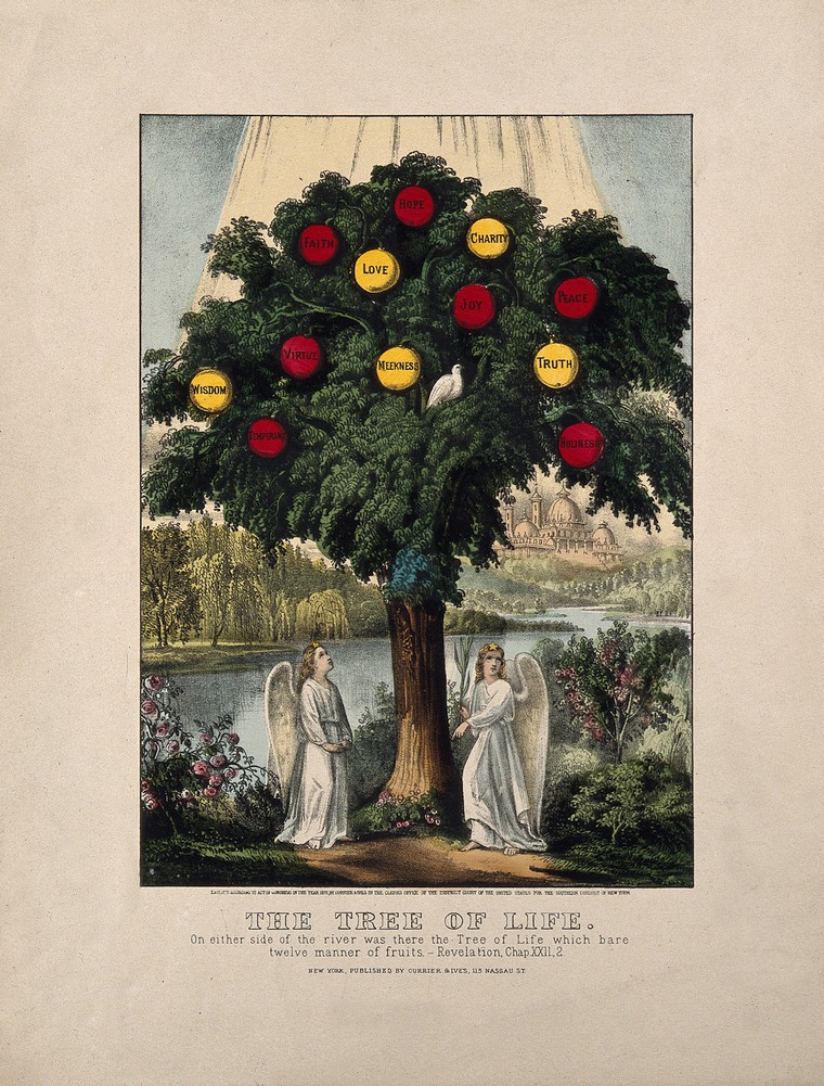 Coloured lithograph, 1870, after J. Bakewell, 1771.